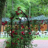 Red Roses on  a Trellis